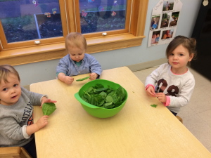 Toddlers exploring spinach leaves